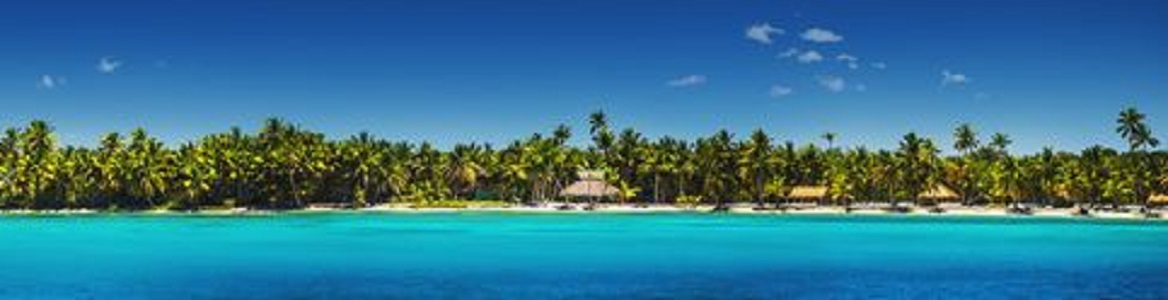 Panoramic view of Exotic Palm trees on the tropical beach - Panoramic view of Exotic Palm trees on the tropical Island beach